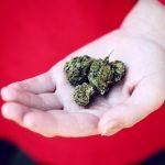 Cannabis terapeutica: fibromialgia e trattamento del dolore